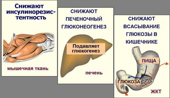 глюкофаж лонг 500 для похудения отзывы